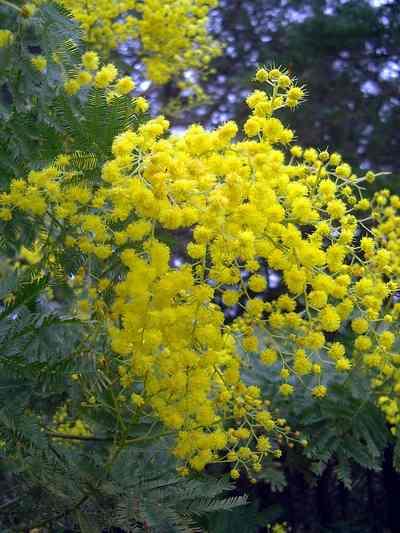 Quali piante per un giardino mediterraneo?